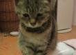 Nalezené koťátko